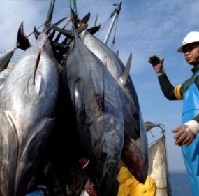 tuna-fishing-pacific-ocean