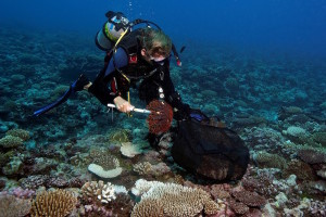 Dr-Andrew-Bruckner-Chief-Scientist-KSLOF-collects-crown-thorns-starfish