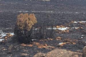 Tasmania-fires-black-landscape-Central-Plateau