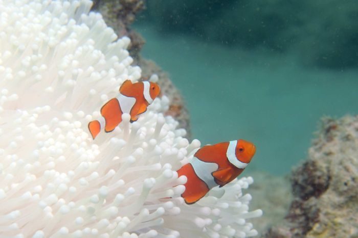 Scientists Most Northern Great Barrier Reef Coral Now Dead