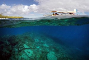 Great-Barrier-Reef-tourist-boat-coral-gardens