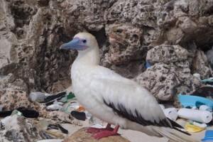 plastic-pollution-beach-sea-bird